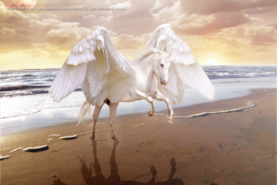 unicorn pegasus wallpaper